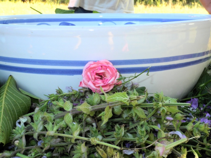 Preparing flower water